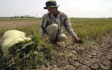 Mặn xâm nhập sâu tại Đồng bằng sông Cửu Long