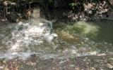 Cần giải quyết ngay vấn đề môi trường nước