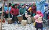 Đầu xuân chơi chợ Phố Cáo
