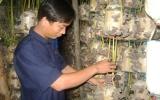 Hiệu quả từ những dự án trồng nấm