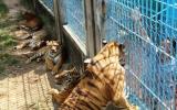 135 tổ chức, hộ gia đình được cấp giấy chứng nhận nuôi nhốt động vật hoang dã
