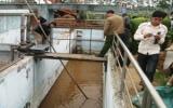 Tung Kuang bị đình chỉ sản xuất phát sinh xả thải