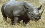 Tìm thấy xác động vật quý hiếm nhất thế giới tại VN