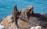 Thằn lằn có nguy cơ tuyệt chủng
