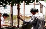 TP.HCM: 300 con cá sấu bị trộm trong một đêm