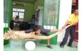 Khoai mì dài 2,2m