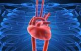 Những điều bất ngờ về tim