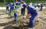 Công ty TNHH Một thành viên Cao su Dầu Tiếng: Trồng mới - tái canh trên 1.600 ha cao su
