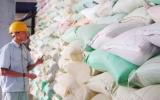 Mua tạm trữ tối đa 1 triệu tấn quy gạo vụ Hè Thu 2010