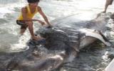 Phát hiện con cá nhám khổng lồ mắc kẹt trên ghềnh đá