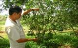 Ngành nông nghiệp - phát triển nông thôn Bình Dương: Hiệu quả thiết thực từ những phong trào thi đua