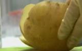 Tạo năng lượng từ khoai tây
