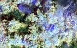 Vệ tinh phát hiện 636 điểm cháy rừng ở Nga
