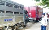 Tăng cường các biện pháp phòng, chống dịch bệnh heo tai xanh trên địa bàn