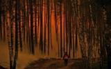 Nga: Cháy rừng đe dọa cơ sở hạt nhân thứ hai