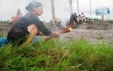 Hà Nội: 'Xử lý nghiêm vụ hàng chục mộ 'mất tích''