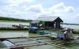 Chấm dứt nuôi cá bè trên lòng hồ Dầu Tiếng: Vẫn loay hoay tìm cách giải quyết!