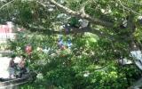 Trèo cây trên bờ sông gây nguy hiểm