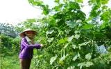 Phụ nữ Phú Giáo: Tích cực học tập và làm theo lời Bác