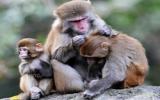 Bé sơ sinh thiệt mạng vì bị khỉ bắt