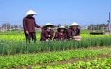 Ấn tượng những làng nghề xứ Quảng