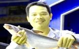Nông dân điêu đứng vì nuôi cá tra