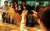 Trồng lúa trong văn phòng