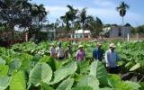 Hội Nông dân xã Tân Bình (Dĩ An): Đẩy mạnh chuyển giao khoa học kỹ thuật cho nông dân