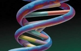 Cơ thể con người có tới 100 gen liên quan với bệnh tật