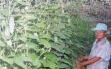 Dự án Cánh đồng trồng rau màu giá trị kinh tế cao: Nông dân phấn khởi vì hiệu quả, chất lượng cao