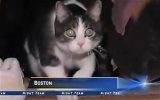 Mèo được triệu tập đến tòa án