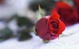 Valentine: Có thể bạn chưa biết