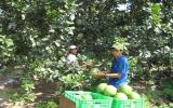 Hội Nông dân huyện Bến Cát: Nhiều chương trình giúp hội viên thoát nghèo