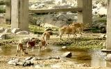 Tây Nguyên đối mặt với khô hạn