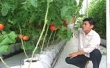 Người tiêu dùng cần cảnh giác với dư lượng Nitrat trong rau quả quá cao