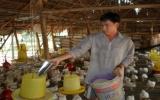 """Chăn nuôi thời """"bão giá"""": Tiết kiệm chi phí để duy trì sản xuất!"""
