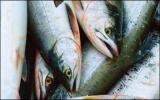Ăn cá giảm trầm cảm sau sinh