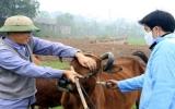 Đã cơ bản khống chế dịch bệnh gia súc, gia cầm