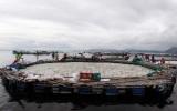 800 tấn cá chết trắng hồ ở Philippines