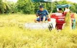 Tiến tới xây dựng vùng lúa chất lượng cao