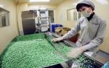 Thị trường dược phẩm Việt sẽ vượt mức 2 tỷ USD