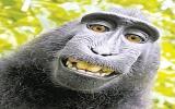 Khỉ tự chụp hình chân dung
