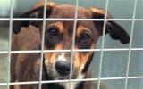 Thành phố cấm chó tại Trung Quốc