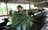 Hội Phụ nữ xã Long Tân tích cực giúp nhau làm kinh tế