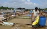 Triển khai Đề án Bảo vệ môi trường lưu vực hệ thống sông Đồng Nai