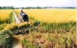 Triển khai nhiều hoạt động hỗ trợ nông dân