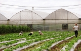 """Phú Giáo: Miền """"đất hứa"""" cho nông nghiệp công nghệ cao"""