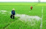 Phấn đấu đạt 50% diện tích lúa gieo thẳng vào 2015