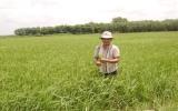 Hội nông dân huyện Dầu Tiếng:  Ứng dụng tiến bộ khoa học vào sản xuất đạt hiệu quả cao