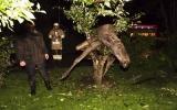Con nai bị mắc kẹt trên cây do… say rượu